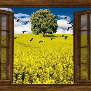 Fenêtre BBC pour une maison passive positive moderne